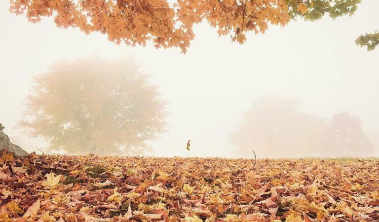 تساقط أوراق الشجر في الخريف