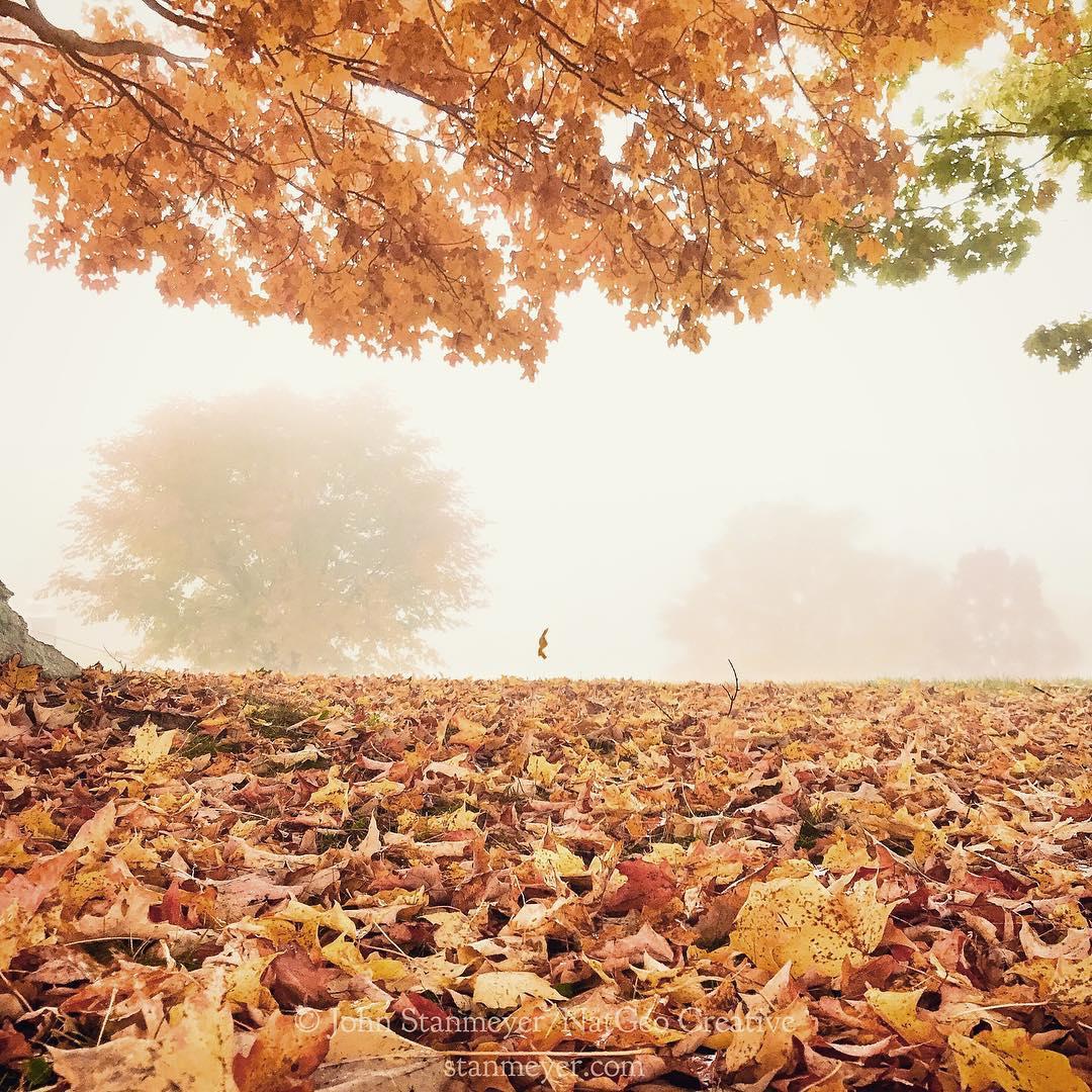 تساقط ورق الشجر في فصل الخريف